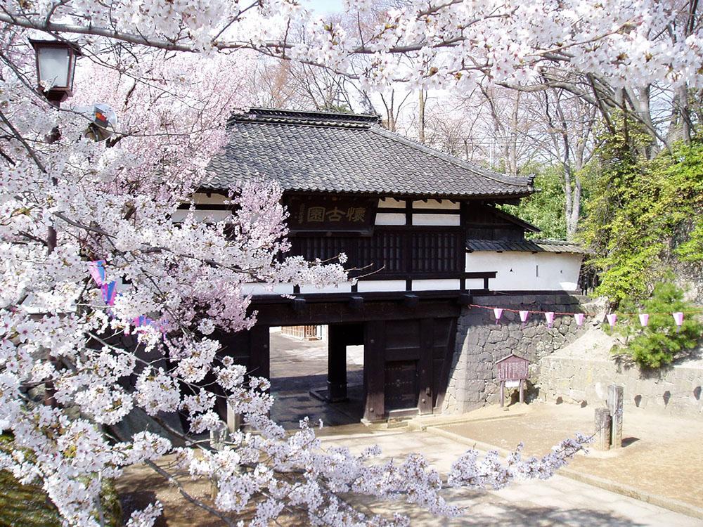 桜の懐古園.JPG